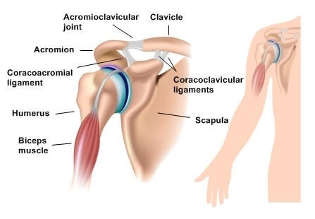 Relieving Stress In the Subclavicus To Help Reduce Risk Of ...