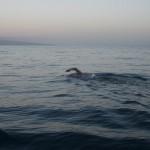 open-water-swimmer