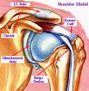 shoulder-diagram-injuries