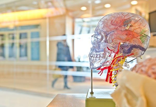 johns-hopkins-brain-imaging-study-jesse-orrico-unsplash