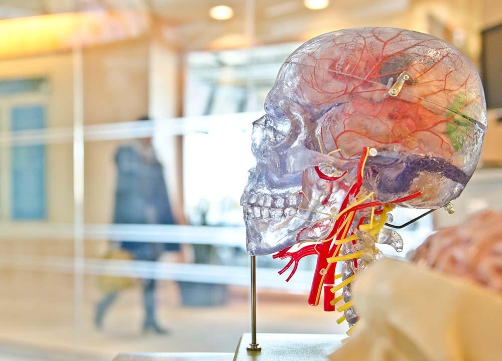 johns-hopkins-brain-imaging-study-swimmers
